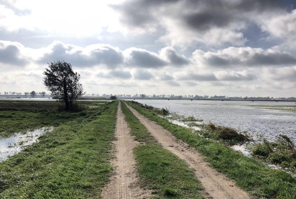 Zalane łąki w gminie Łęczyca – interwencja