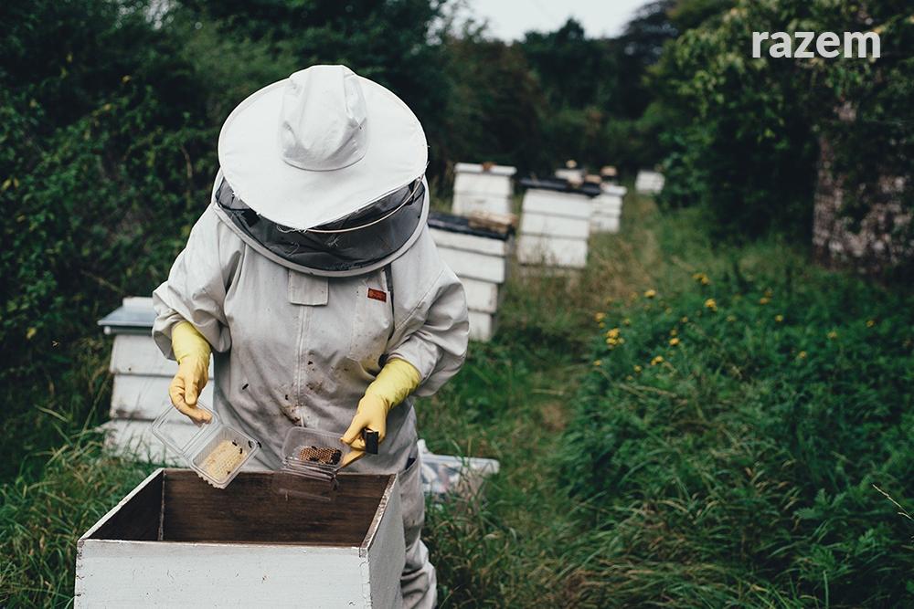 Pytam o ochronę pasiek przed skutkami stosowania oprysków pestycydami