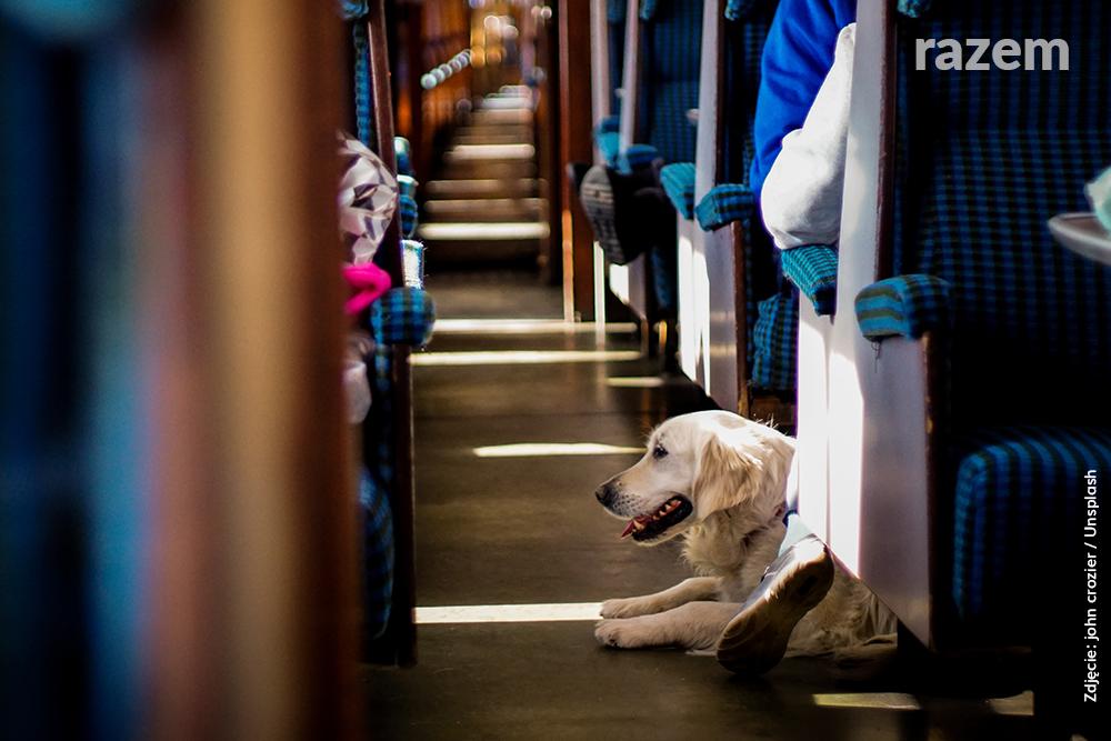 Psy w pociągach – jest odpowiedź Ministerstwa